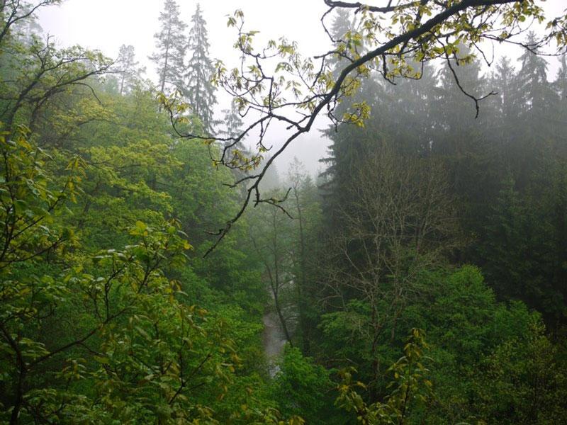 Wandern-Thayatal-Raabs-Kollmitzgraben-011